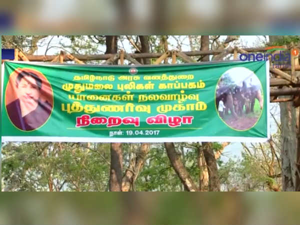 Rejuvenation camp for temple elephants ends