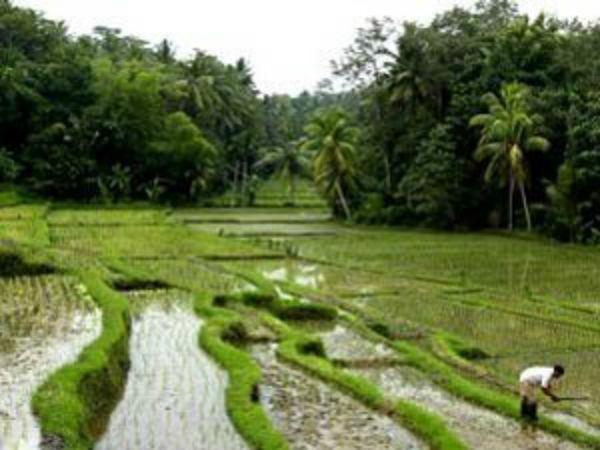 காவிரிப் படுகை வறண்டு போகத்தான் தடுத்து நிறுத்தப்பட்டதா காவிரி நீர்? #kathiramangalam