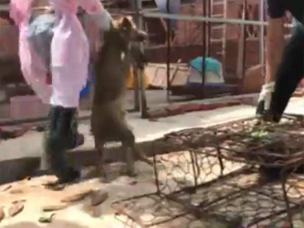கடும் எதிர்ப்புகளை மீறி சீனாவில் களைகட்டிய நாய்க்கறி திருவிழா