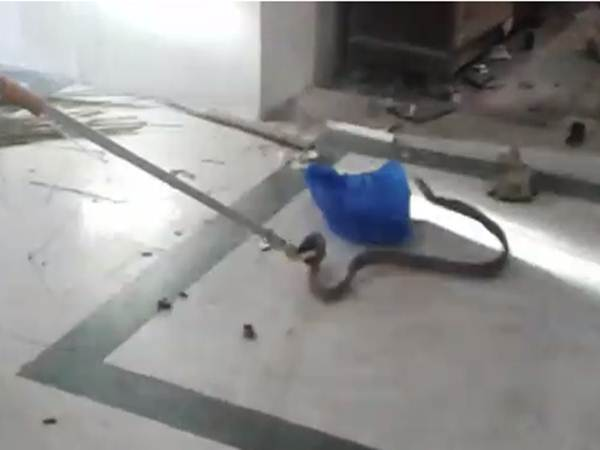 A snake was caught inside the Tamilnadu secretariat