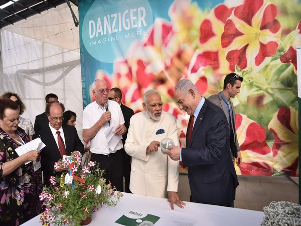 Flower breed named after Modi in Israel