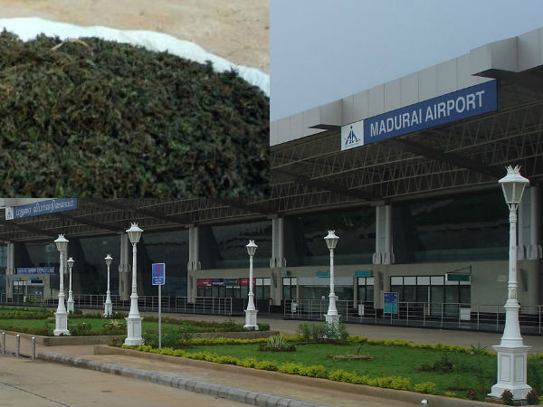 Drugs seized in the Madurai Airport.