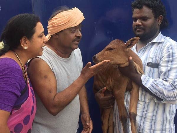 A new calf born in Vijayakanth's house