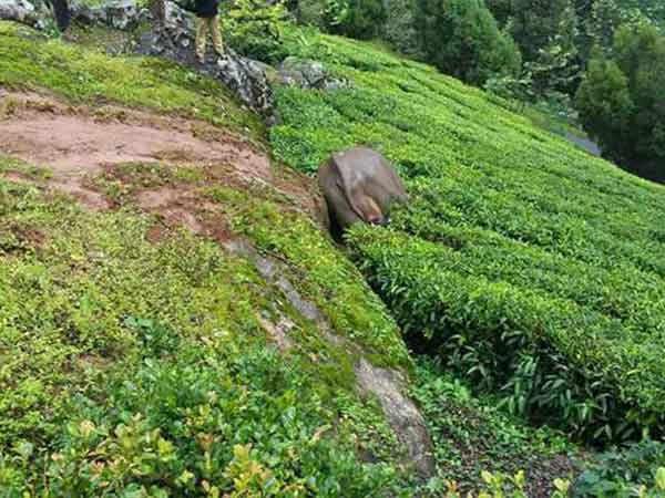 Elephant died in Munnar forest range