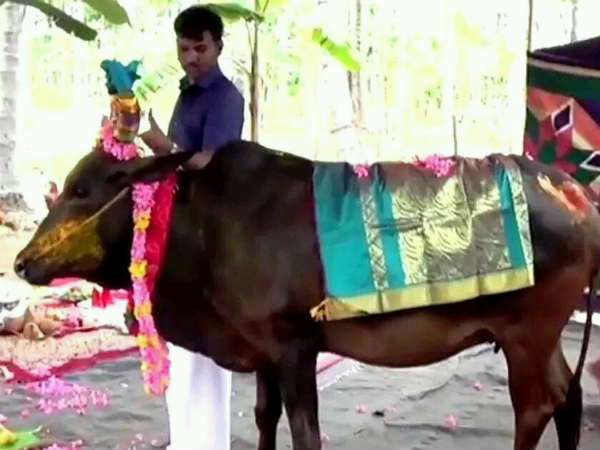 Baby shower function for cow in Coimbatore