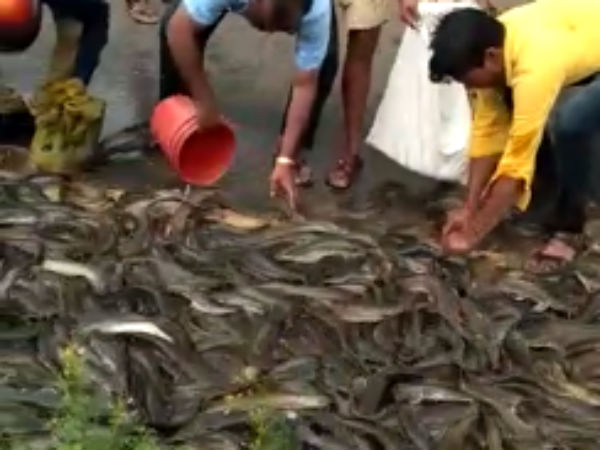 A video goes viral that people takes the fish which were in the sides of NH