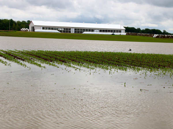 1000 acres of crops drown in rain water in Sirkazhi