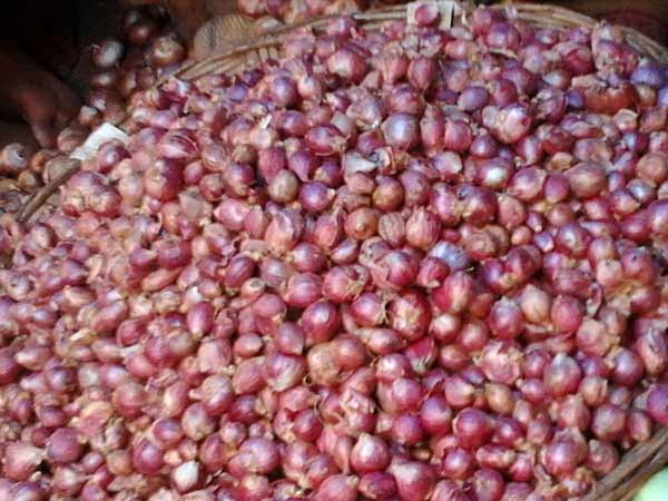 Small Onion's rate will not reduce upto Deepavali