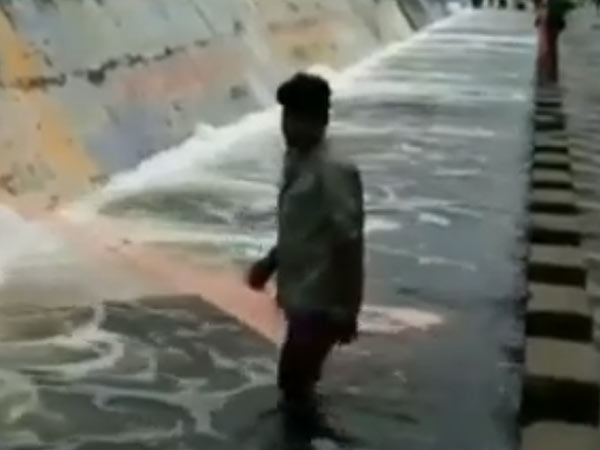 Fishes found in Cooum river at Thiruverkadu in Chennai