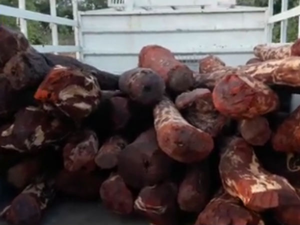 AP Warns over Red Sandalwood Smugglers