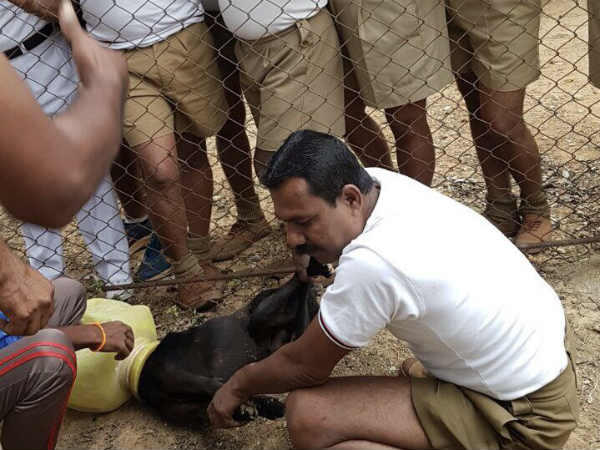 15 policemen rescues dog whose head struck with Pitcher in Bangalore