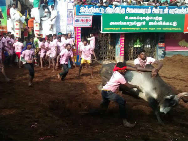best bull tamer gets car prize in Alanganallur Jallikattu