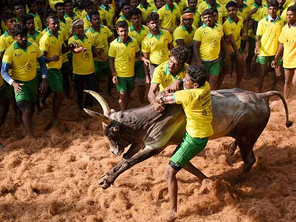 AWBI wrote letter to tamilnadu government to follow the new rules for jallikattu