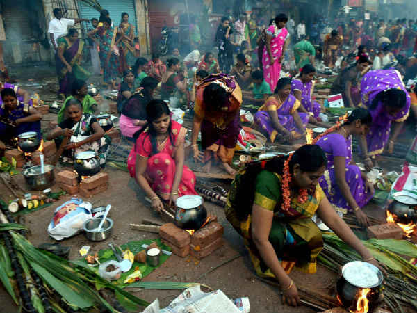 Thai Pongal The Harvest Festival