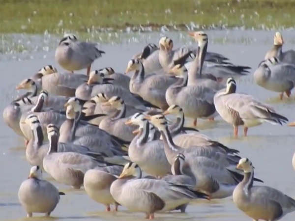 bird sanctuary in nellai becames empty after water crisis