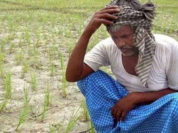 Nagapattinam farmers worried about their crops because of no water