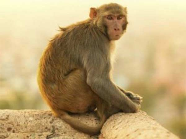 drunken monkey creates ruckus at bar