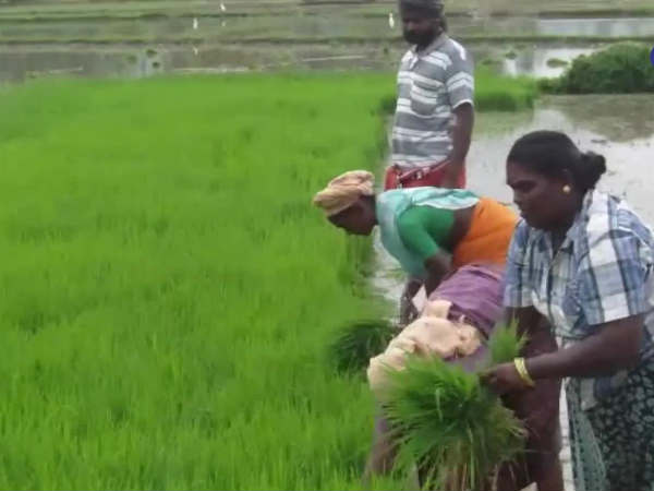 Tn government announced RS. 8,000 crores crop loan for farmers