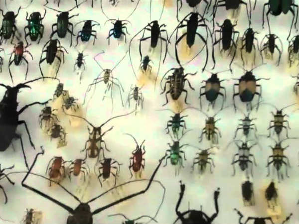 TN CM Inaugurated Indias biggest insect museum at Coimbatore
