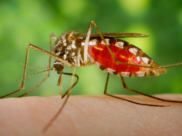 New military radar technology to destroy mosquitoes