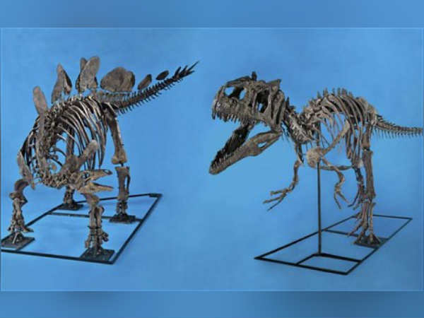2 Dinosaur Skeletons For Auction