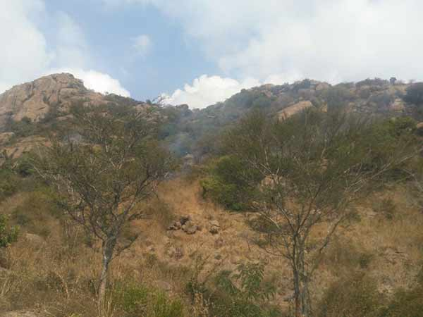 Forest fire in Parvatha mountain at Thiruvannamalai