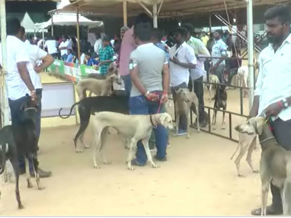All India Dogs Exhibition in Coimbatore