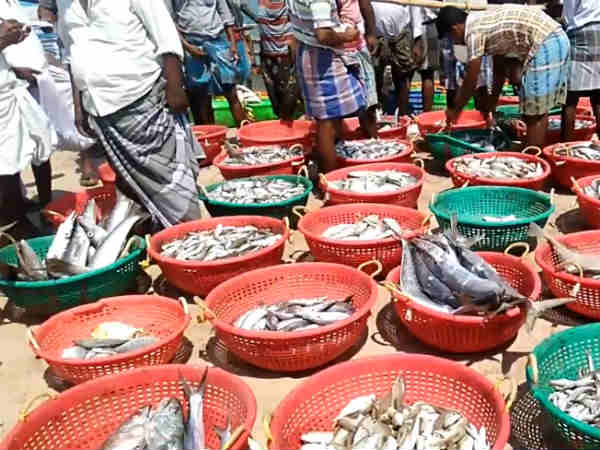 Our fishermen are not using chemical in preservation says Minister Jayakumar