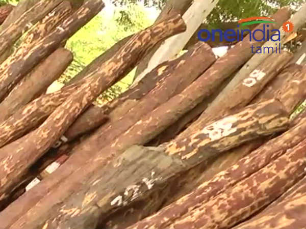 2 people arrest and 300 kg Red wood caught near Thiruvallur