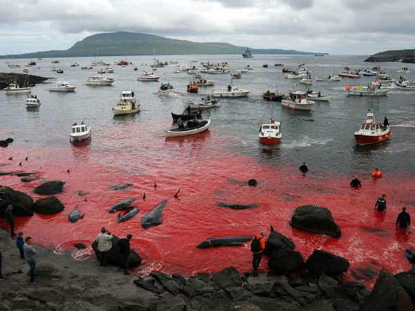 Horrible Whale murder: The whole Sea turned into blood