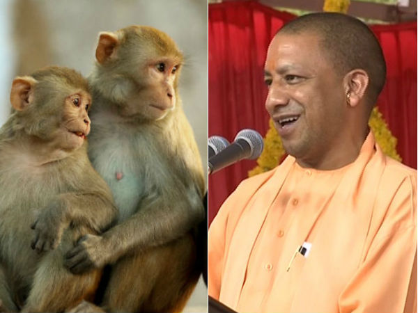 Worship Hanuman for monkey harassment: Chief Minister of UP