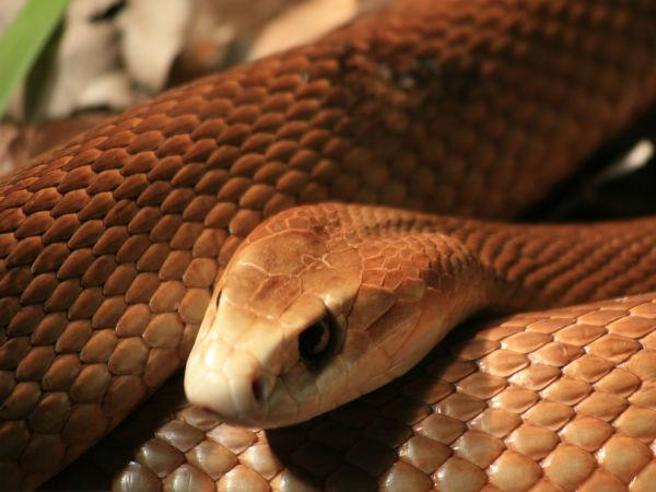 A 6 ft snake found in auto in Ambasamuthiram