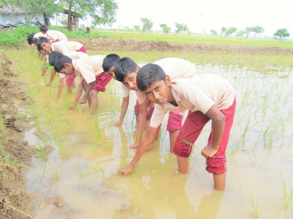Students learn how to do farming works
