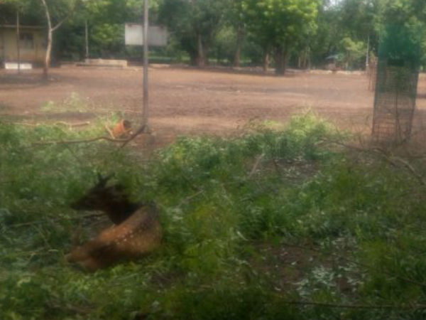 Nearly 30 deers died at Trichy BHEL quarters police investigation is underway