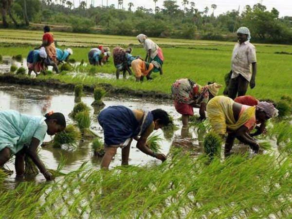 MSP boon: Bjp governments initiative for farmers