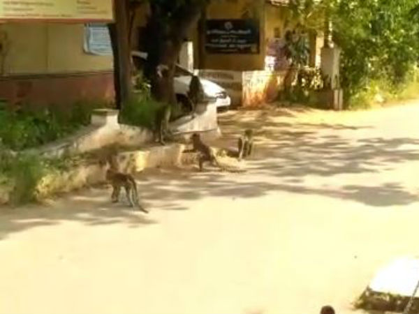 Monkeys entered into coimbatore collector office yesterday