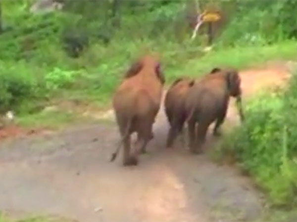 Wild elephant killed cow and goat near Krishnagiri