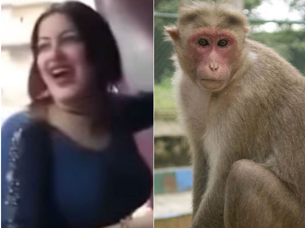 egyptian woman is imprisoned for sexually harassing a monkey