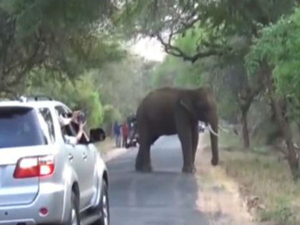Be alert, A lot Of Elephants Crossing On Udumalai - Munnar road