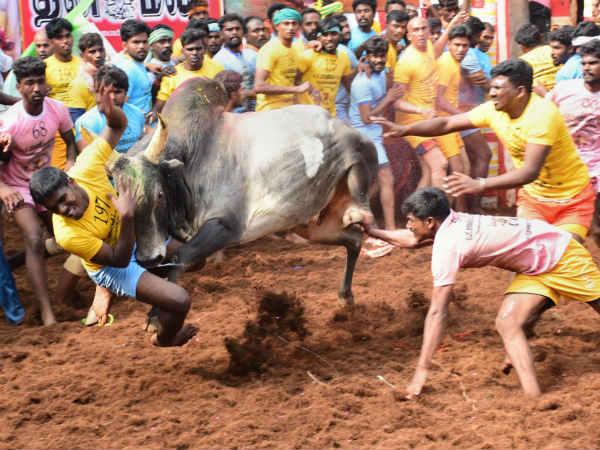அலங்காநல்லூர் ஜல்லிக்கட்டு.. 15 காளைகளை பிடித்த ரஞ்சித்குமாருக்கு முதல் பரிசு வழங்கிய முதல்வர்