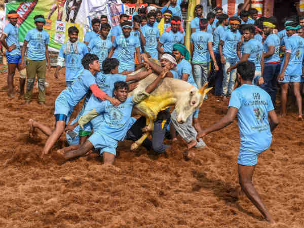 Two viewers die in Viralimalai Jallikattu bulls Stab