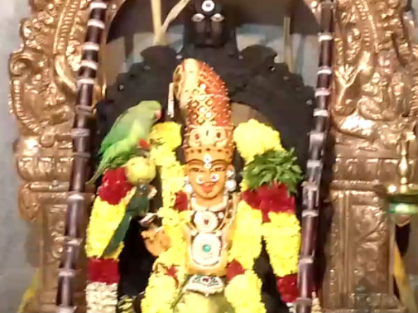 Coimbatore: Parrot sitting on the black Mariamman idol