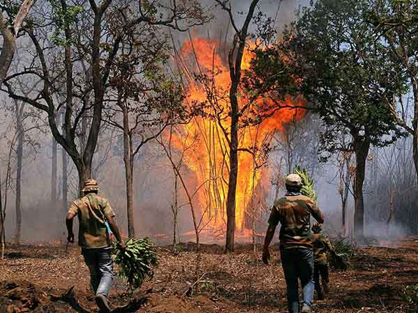 Major fire accident in Bandipur Tiger Reserve