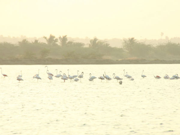 birds population census is taking in kanyakumari