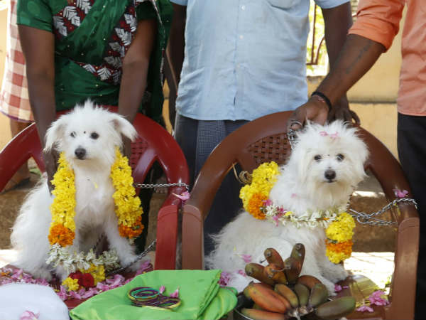 hms marry two dogs in kanyakumari