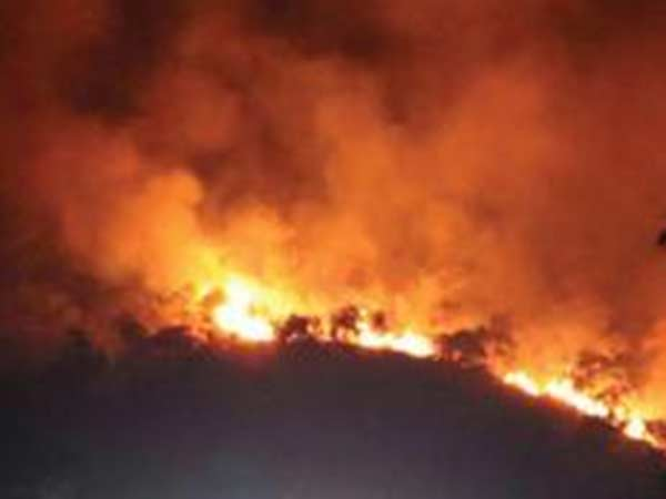 Forest fire in Tamilnadus Sathyamangalam