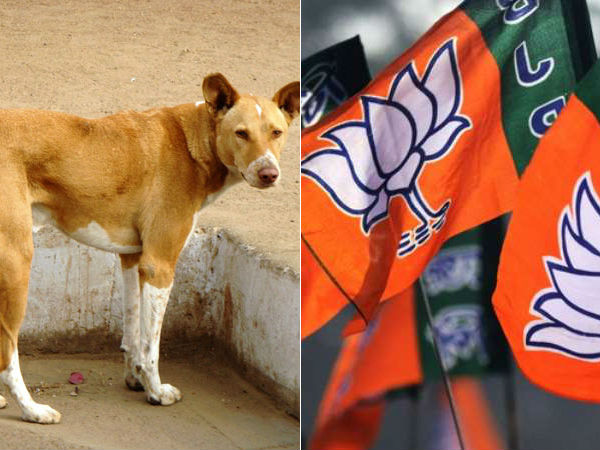 Dog Campaigned with BJP Strickers in Maharashtra