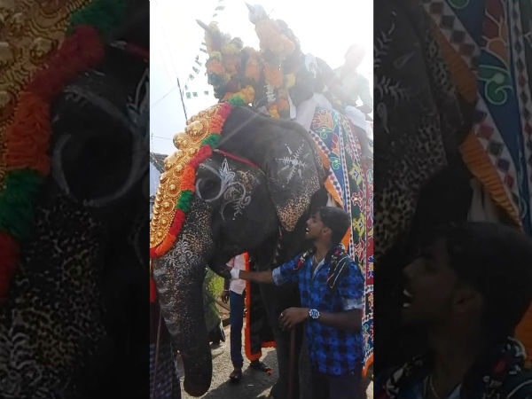 Tenkasi Temple elephant dies due to illness
