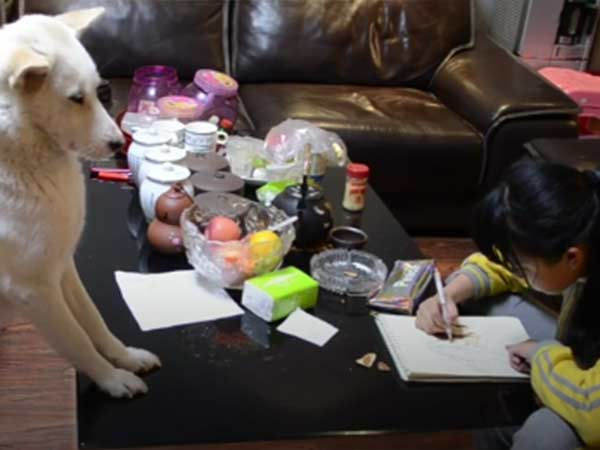 Dad Trained a Dog To Make Sure Daughter correctly Doing Homework