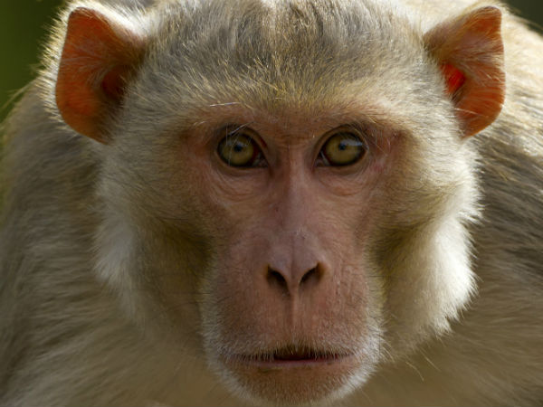 monkey stole Rs 5,000 cash from a toll plaza in Kanpur